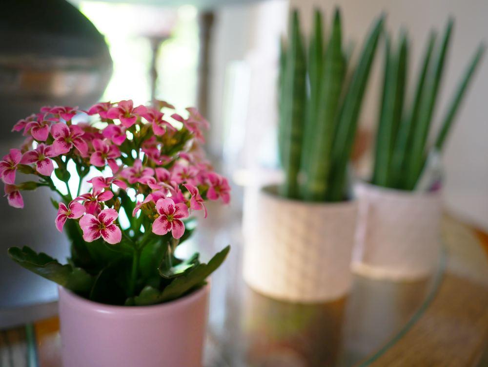 Pflanzenhalter für dekorative Elemente in der eigenen Wohnung